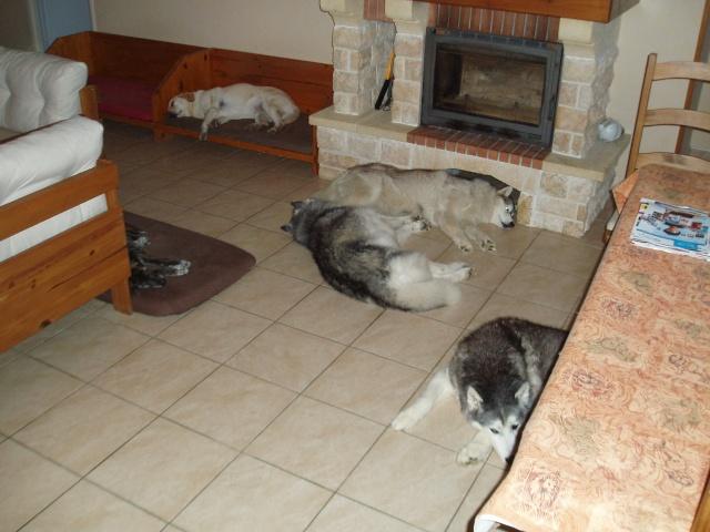 Le post de mon Snow ...ma dernière adoption + ses copains - Page 2 P9089510