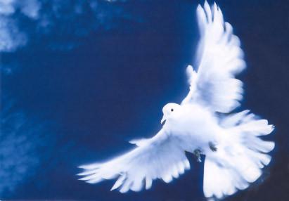 prières de Sainte-Thérèse 96fe9510