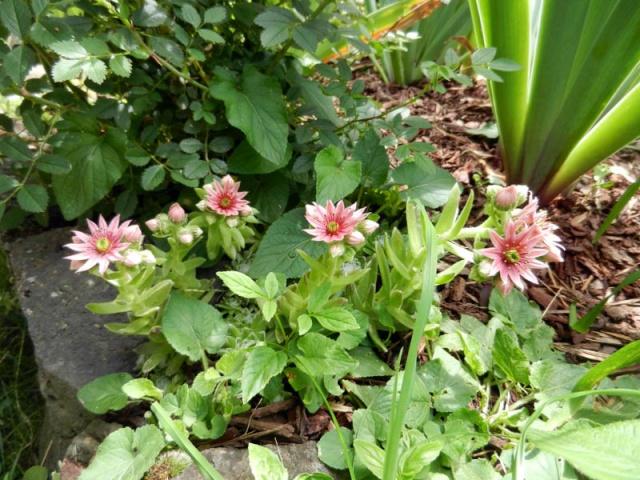 Photos de nos jardins - Page 2 2013-113