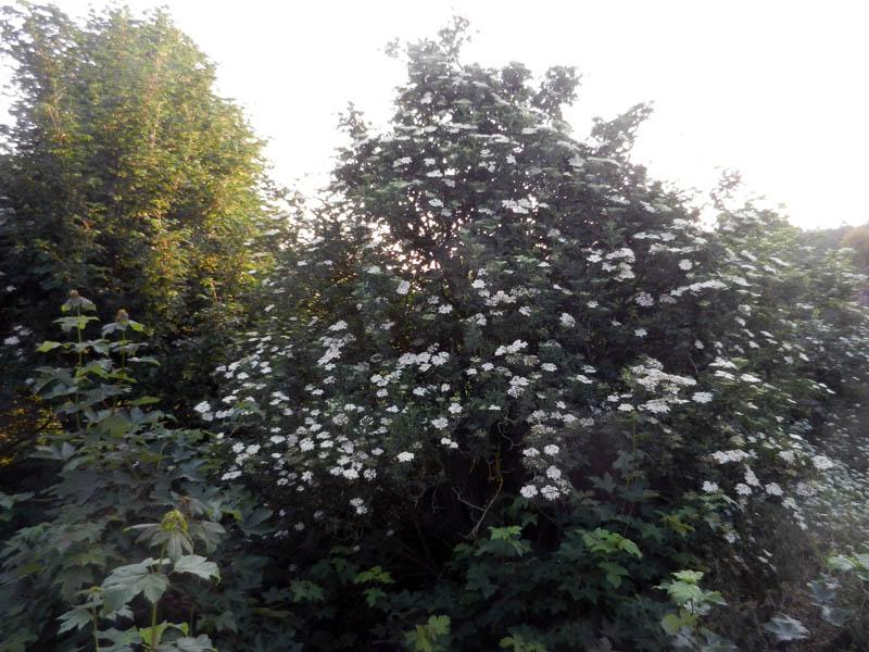 Photos de nos jardins - Page 2 2013-115