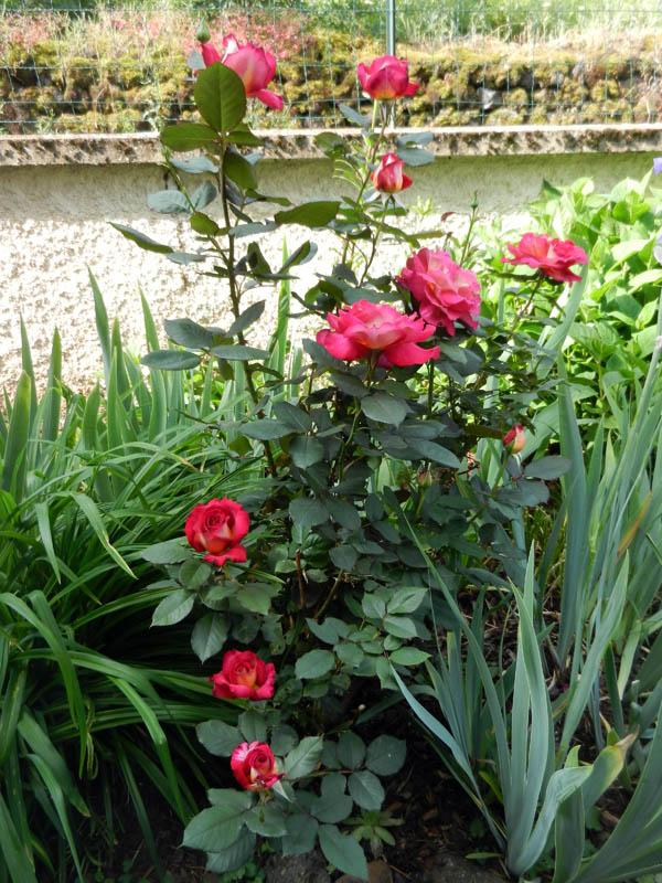 Photos de nos jardins - Page 2 2013-119