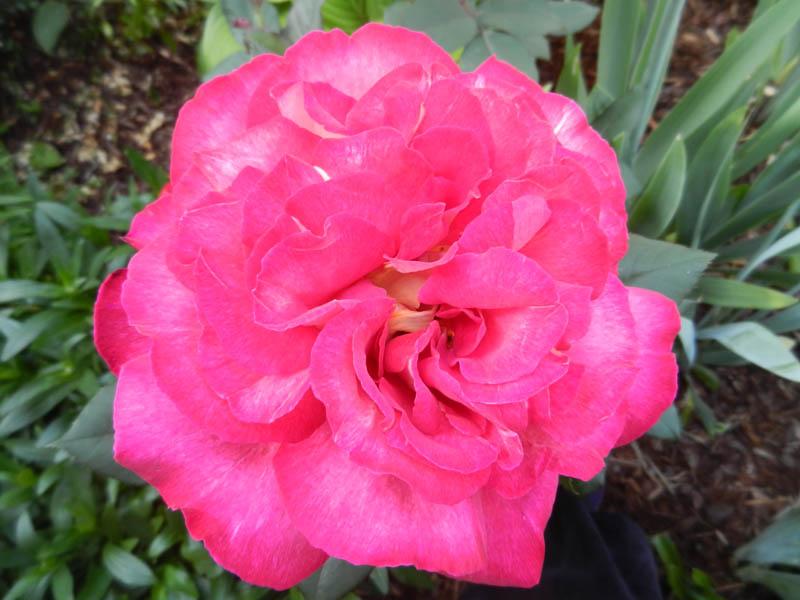 Photos de nos jardins - Page 2 2013-123