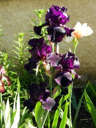 Photos de nos jardins - Page 2 2013-511