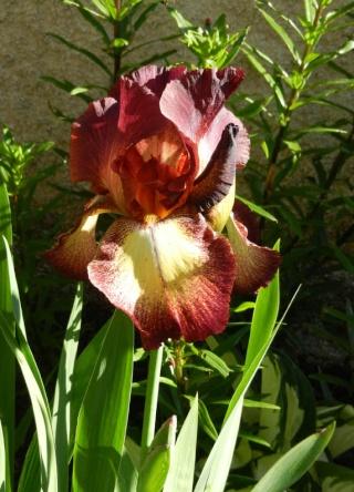 Photos de nos jardins - Page 2 2013-512