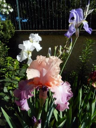 Photos de nos jardins - Page 2 2013-513