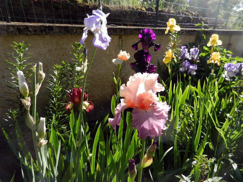 Photos de nos jardins - Page 2 2013-514