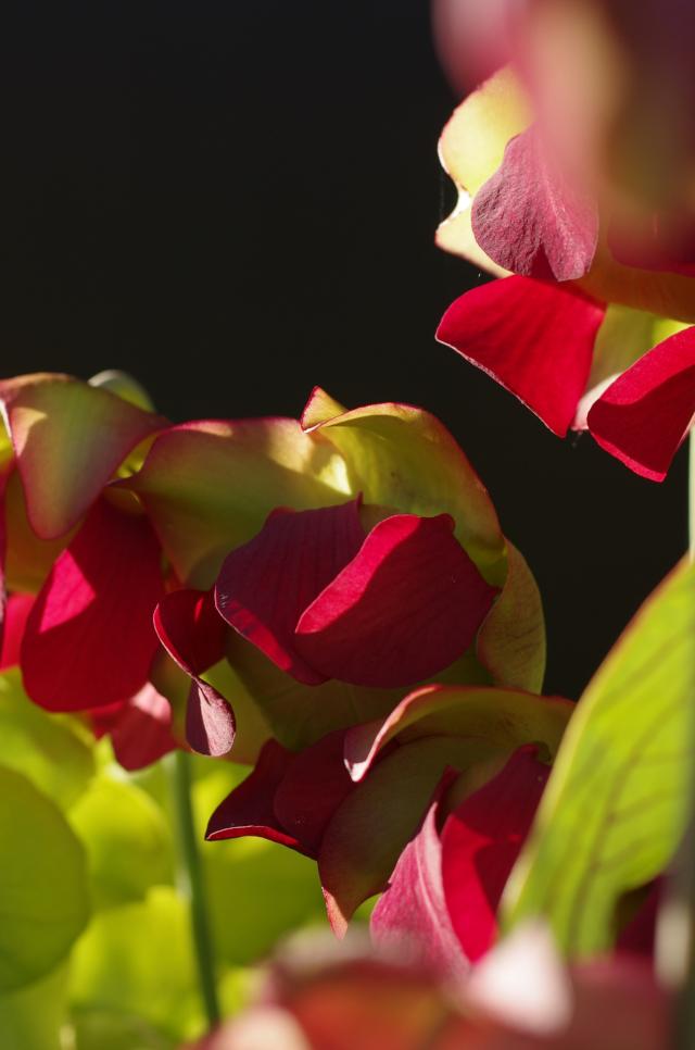 Une question de caractère... Flower11