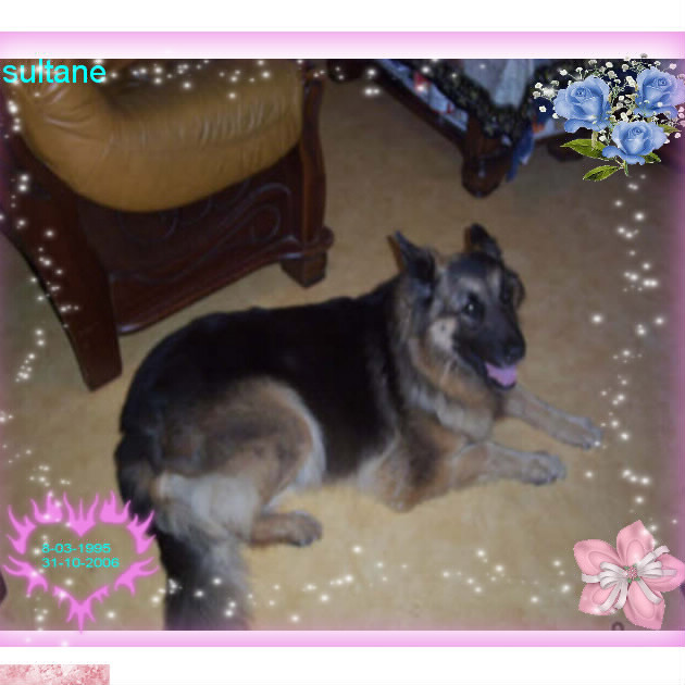 voila mes chiens Bloggi11
