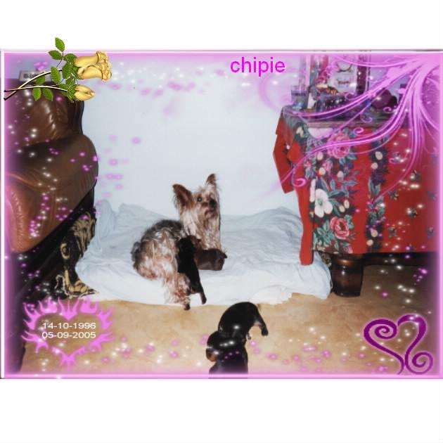 voila mes chiens Bloggi12