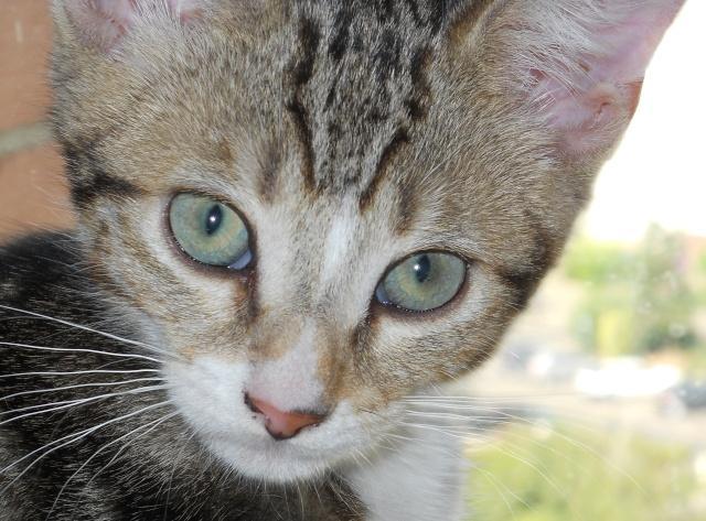 chaton qui a un rapport quasi-hystérique à la nourriture Dscn0114