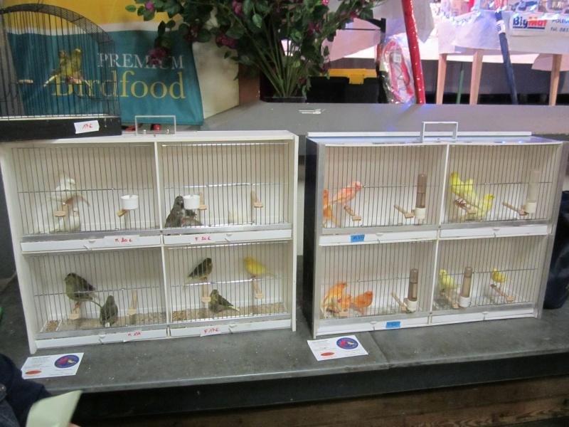 bourses d'oiseaux a flemalle Trihxs10