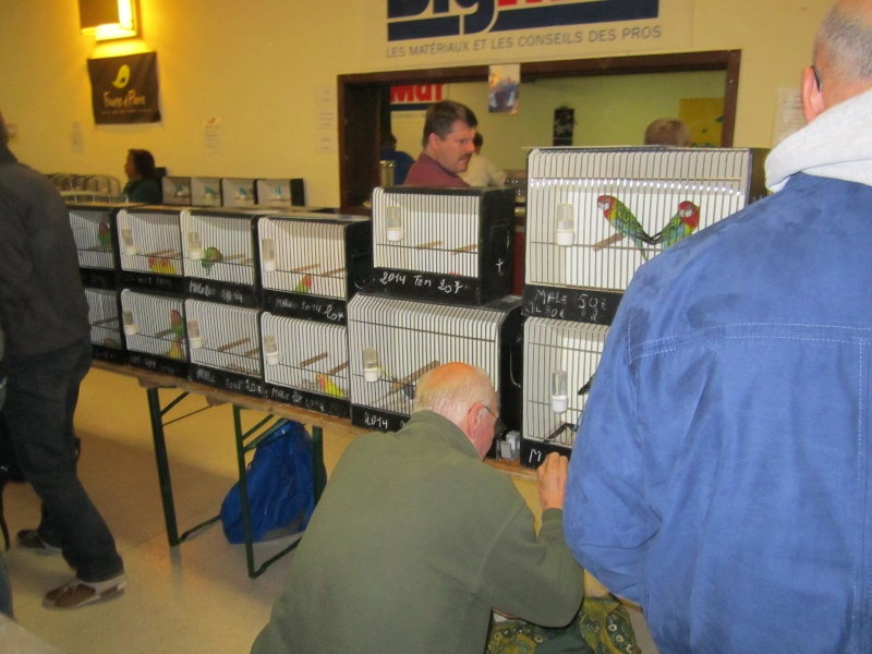 bourses d'oiseaux a flemalle Trihxs11