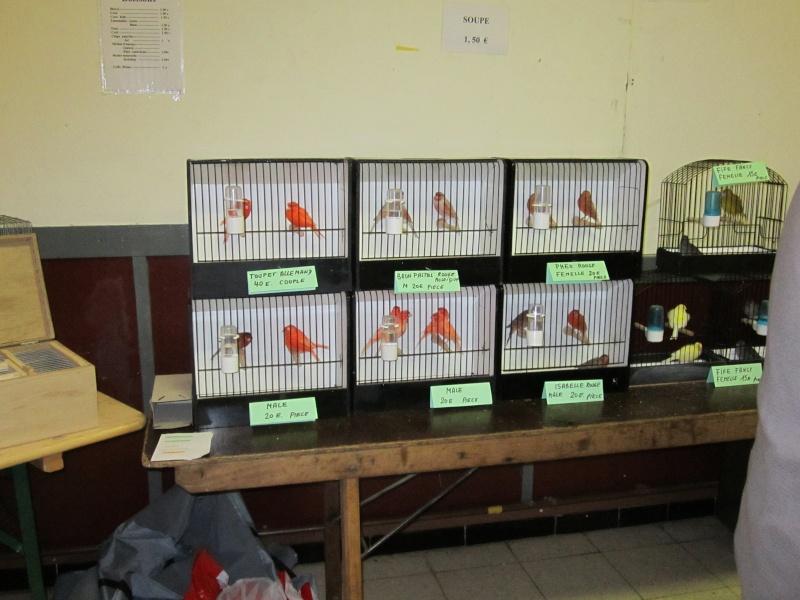bourses d'oiseaux a flemalle Trihxs14