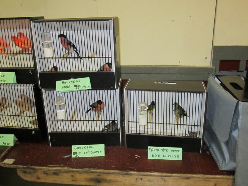 bourses d'oiseaux a flemalle Trihxs16