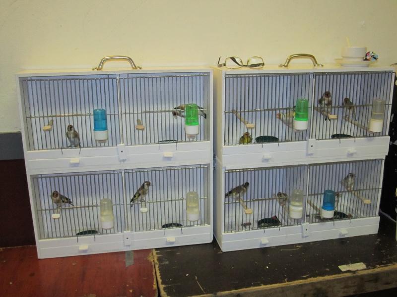bourses d'oiseaux a flemalle Trihxs17