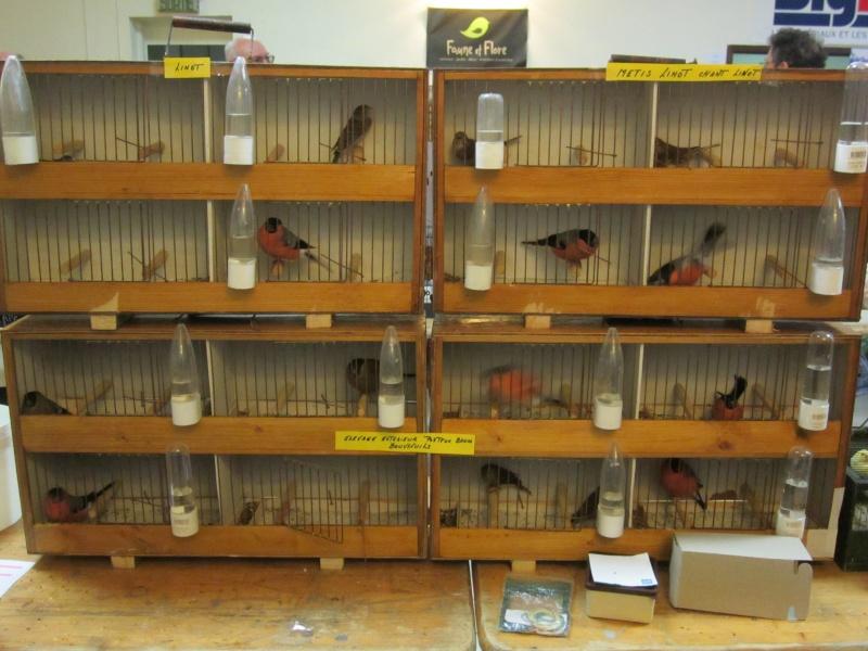bourses d'oiseaux a flemalle Trihxs18