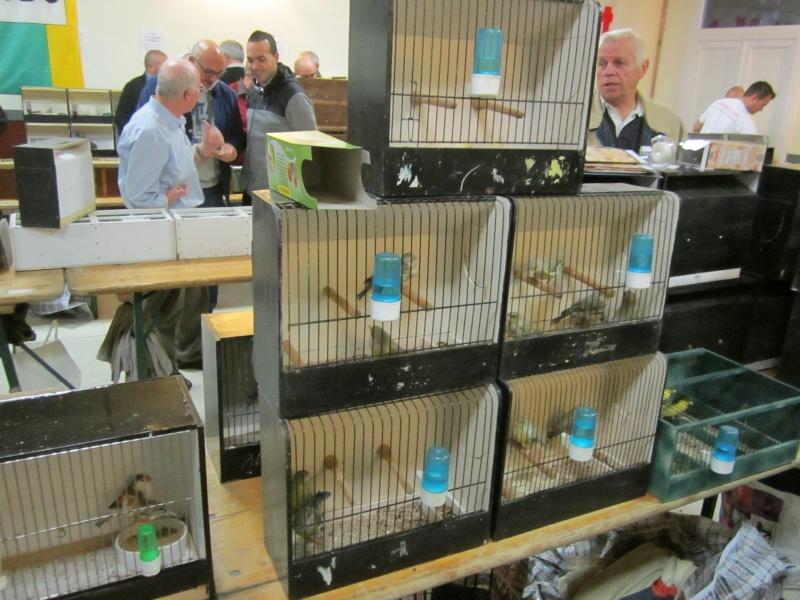 bourses d'oiseaux a flemalle Trihxs21