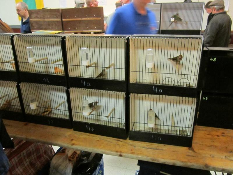 bourses d'oiseaux a flemalle Trihxs22