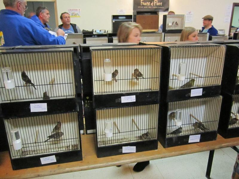 bourses d'oiseaux a flemalle Trihxs23