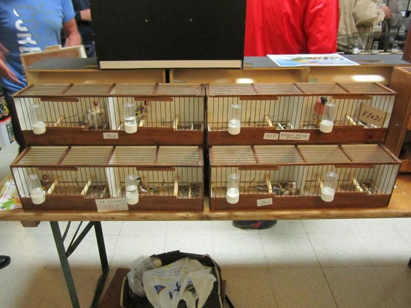 bourses d'oiseaux a flemalle Trihxs26