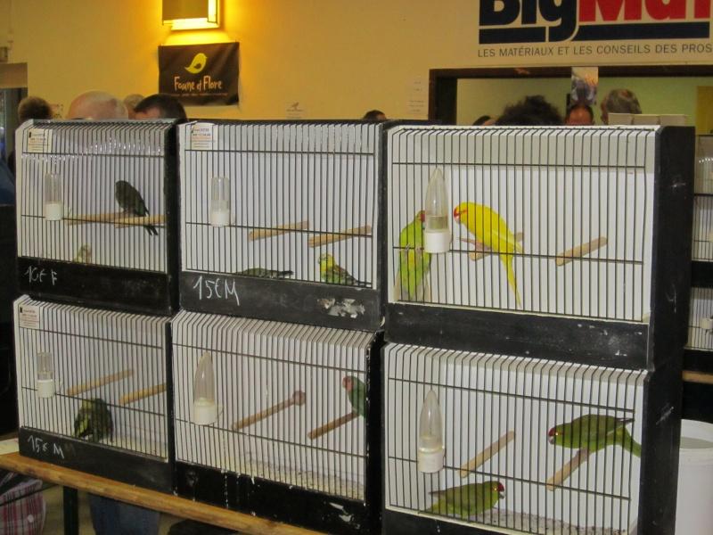 bourses d'oiseaux a flemalle Trihxs30