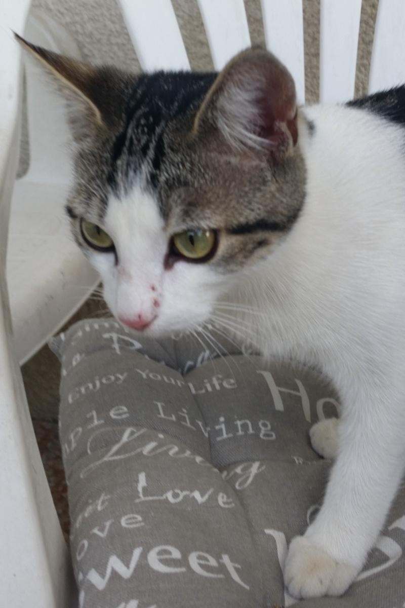 Trouvé chaton aux Ramassiers 20140919