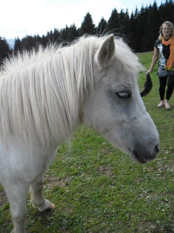 PRISCA - ONC poney typée Shetland née en 1990 - adoptée en septembre 2010 par Delphine - Page 3 Sam_1417