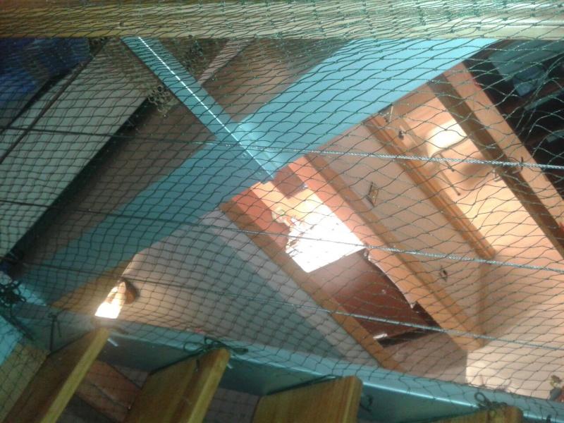 Resumen de ideas para mosquiteras y redes ventanas y balcón para gatos. - Página 2 Akira_14