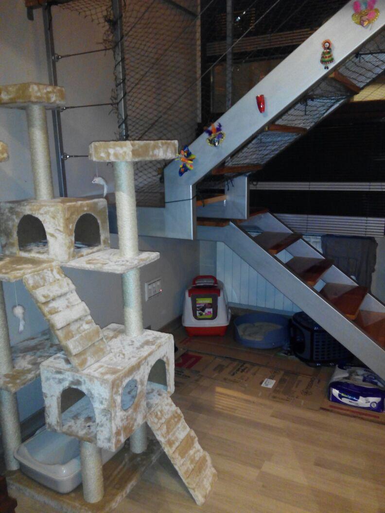 Resumen de ideas para mosquiteras y redes ventanas y balcón para gatos. - Página 2 Akira_16