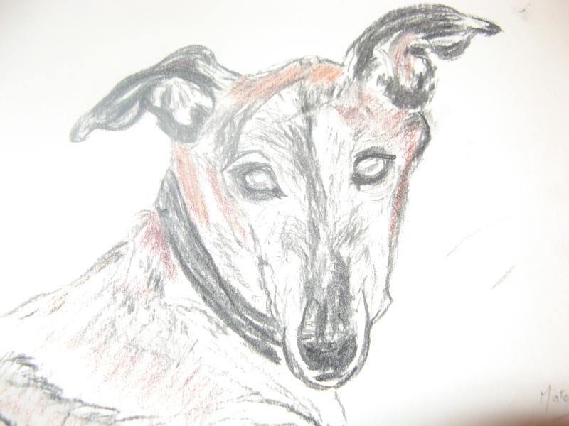 Milo galgo Scooby France –Adopté ! - Page 2 Img_4716
