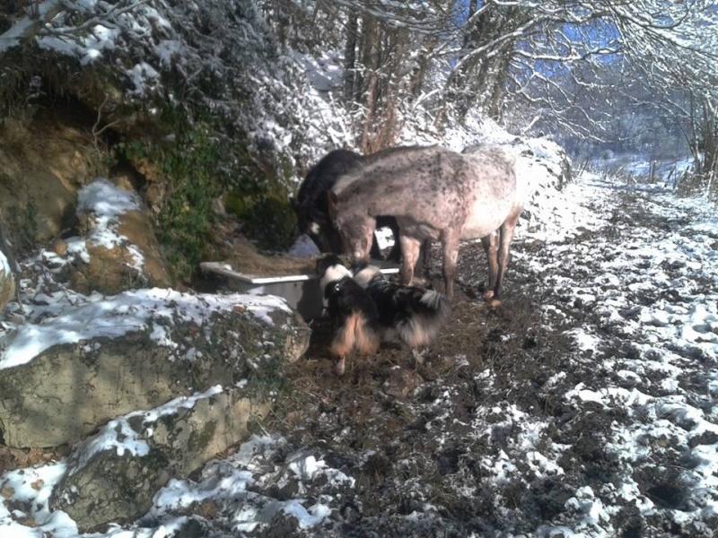 C'est l'hiver !!!! Froid210