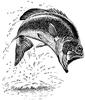 SAILTICA Fishing: 31 Aout et 1er Septembre à Pornichet - Page 4 1f42c611