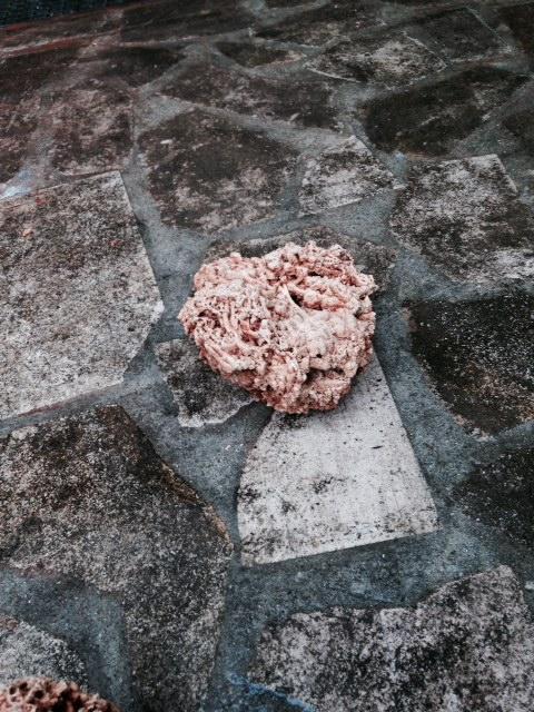 Roches coralliennes pas chères Image10