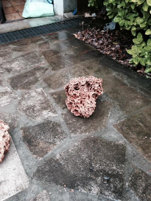 Roches coralliennes pas chères Image_11