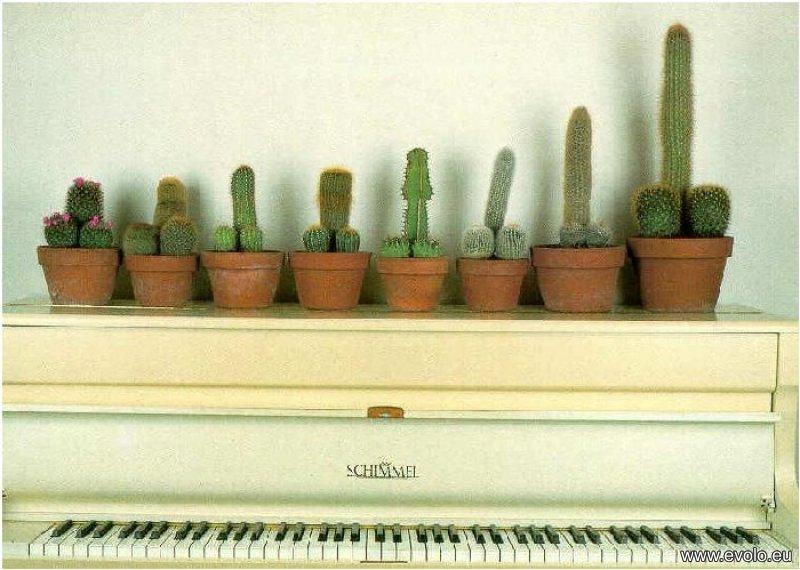 Ai grija ce scrii, te carcotesc! Cactus10
