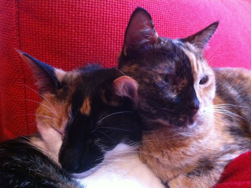 FICELLE et YUMI (Nosy Be) - Page 8 Img_2012