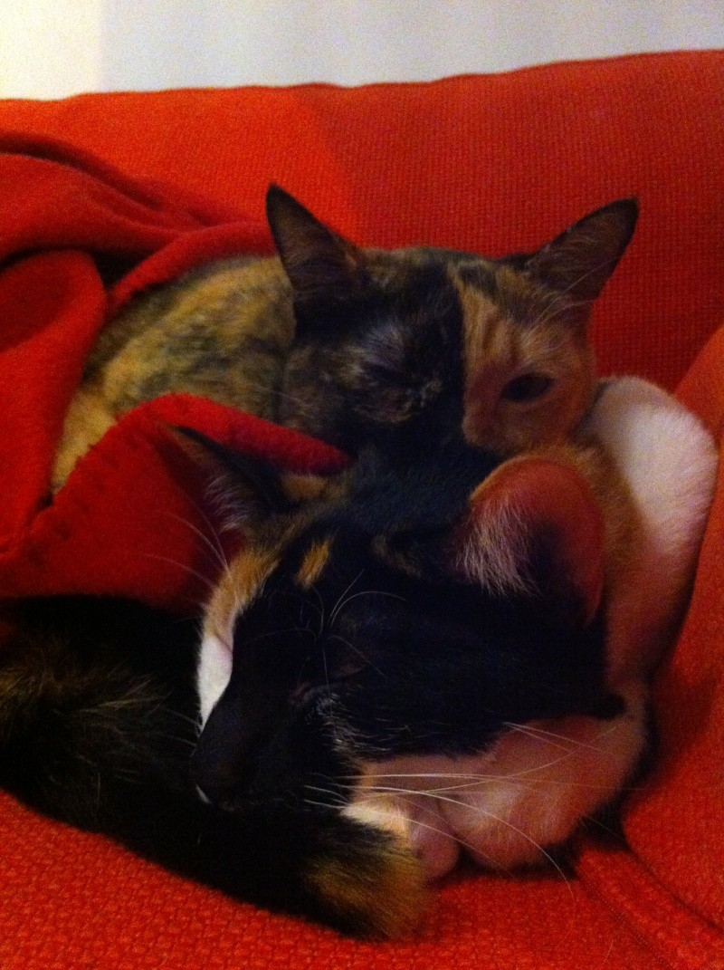 FICELLE et YUMI (Nosy Be) - Page 8 Img_2013