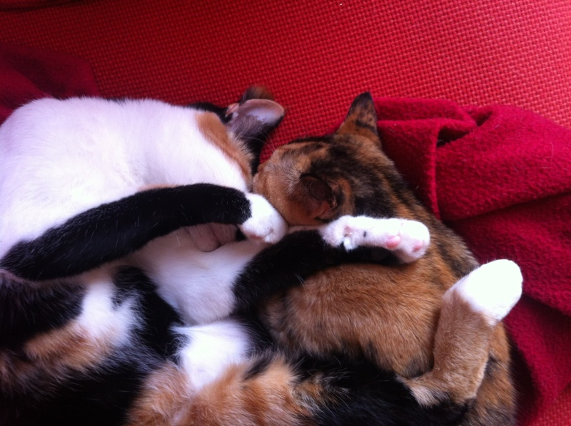 FICELLE et YUMI (Nosy Be) - Page 8 Img_2014