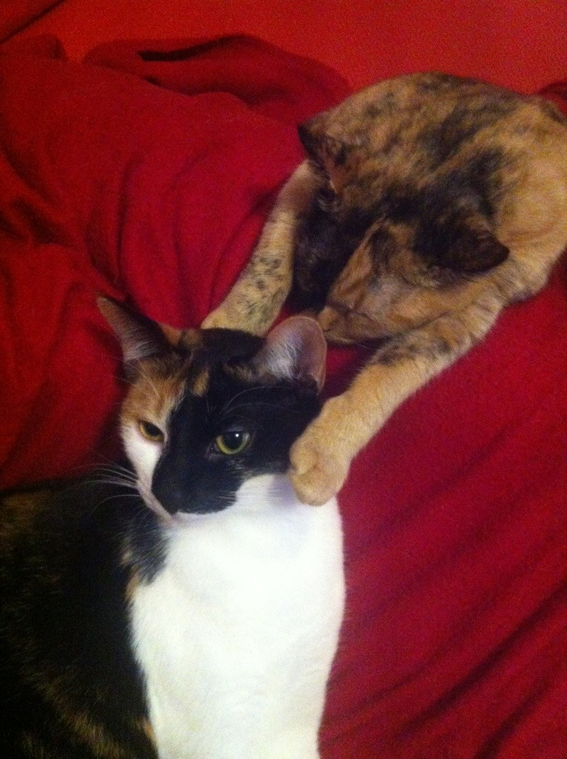FICELLE et YUMI (Nosy Be) - Page 8 Img_2015