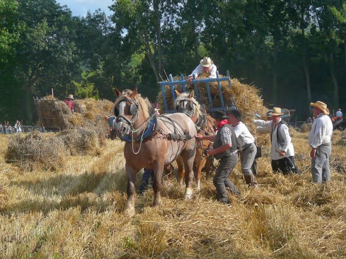 Fête du blé à Pleudihen (22) P1290421