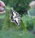 Serre à papillons. - Page 2 Dsc02810