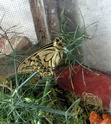 Serre à papillons. - Page 2 Dscn2310