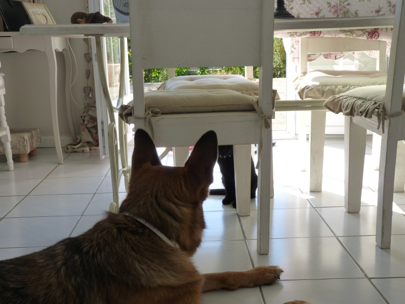 BELLA chez elle - Page 4 P1080411