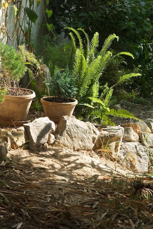 El jardín de senderos que se bifurcan 2_igp011