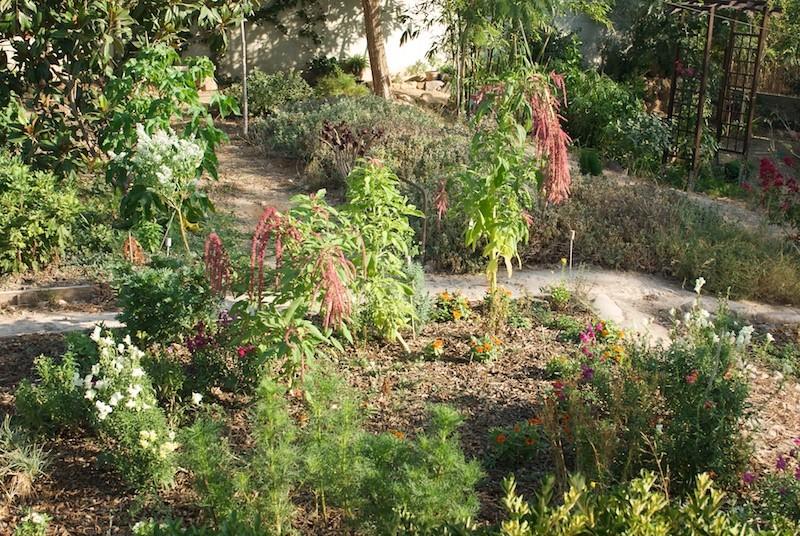 El jardín de senderos que se bifurcan 2_igp116