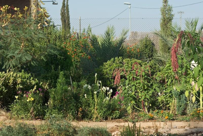 El jardín de senderos que se bifurcan 2_igp117