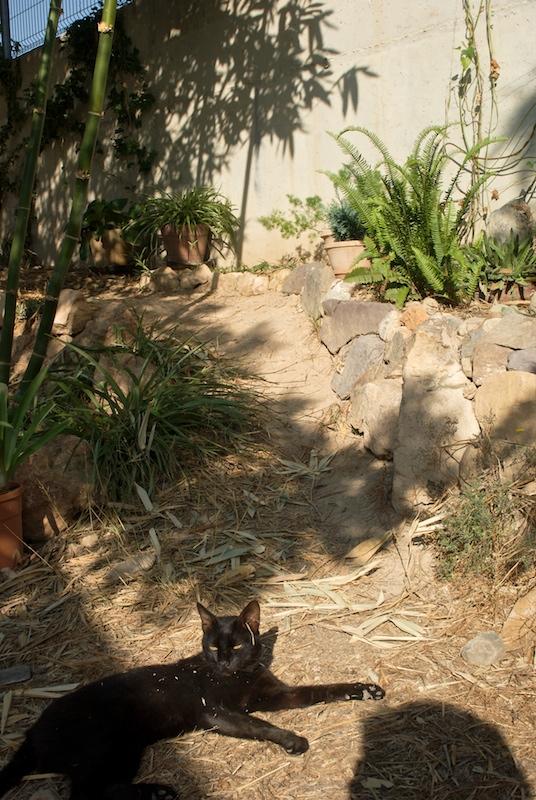 El jardín de senderos que se bifurcan 2_igp121