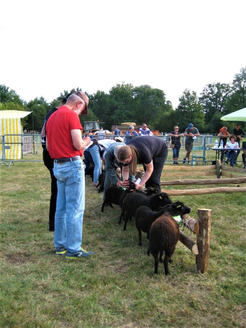 22 septembre 2019 : concours moutons ouessant GEMO dans la Sarthe. Img_2211