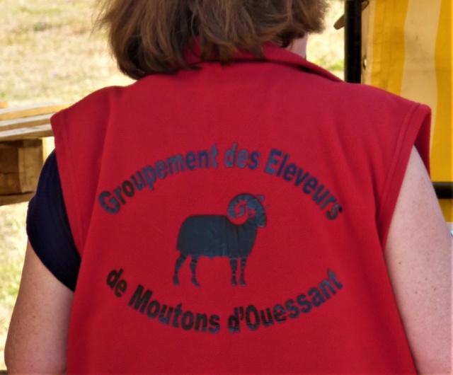 22 septembre 2019 : concours moutons ouessant GEMO dans la Sarthe. P1020413