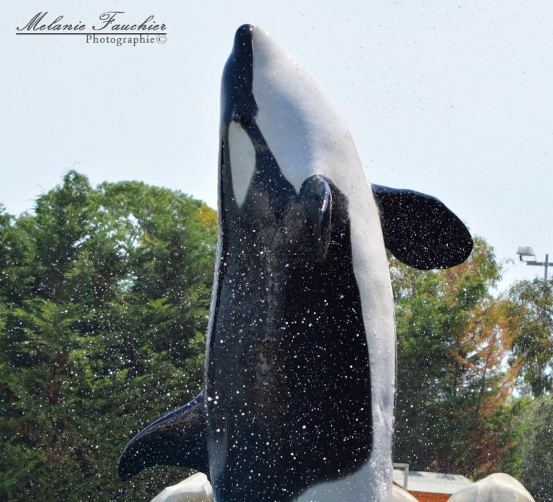[Orques captives] Inouk Dsc_0315